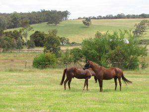 Horses and Bushfires