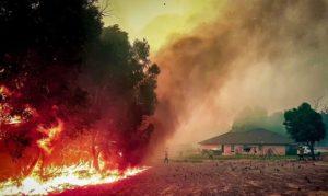Renting and Bushfires